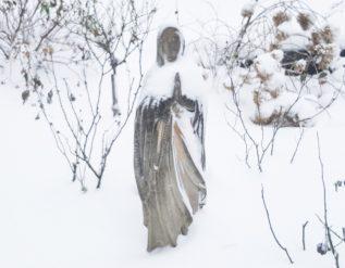 winter-garden-beauty-finegardening