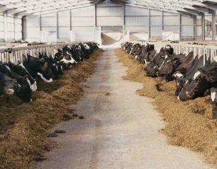 missouri-state-lawmaker-calls-for-cattle-market-investigation