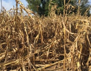 drought-could-last-into-summer