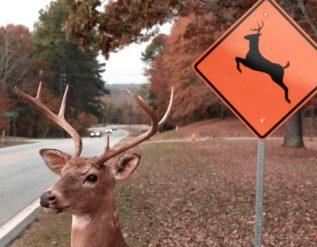 linneus-resident-injured-in-livingston-county-crash-involving-deer