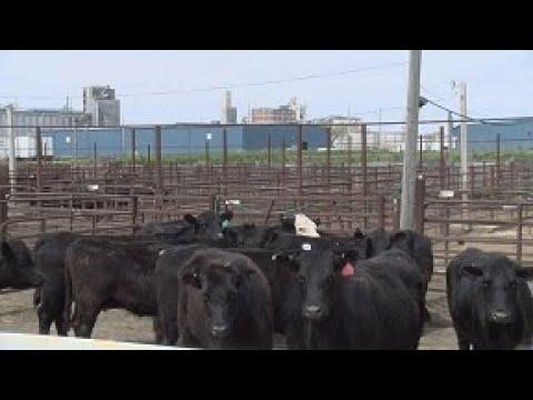 the-st-joseph-stockyards-final-days-closing-in
