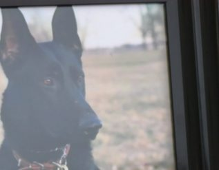st-joseph-police-department-k-9-max-killed-in-the-line-of-duty